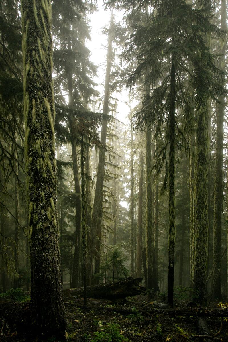Les magnifiques arbres de la Colombie-Britannique montrant toutes sortes de teintes de verts.