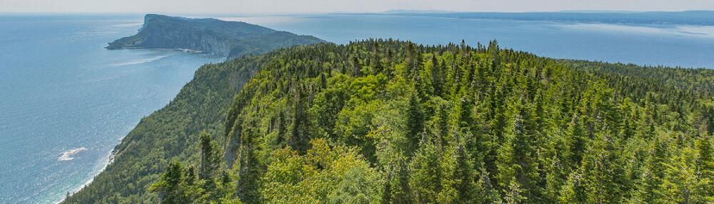 La vue panoramique du haut de la tour d'observation du cap bon ami en Gaspésie