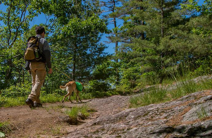 Le doyen Campbell marchant avec son chien lors d'une randonnée sur le sentier des Loups dans le parc de la Gatineau